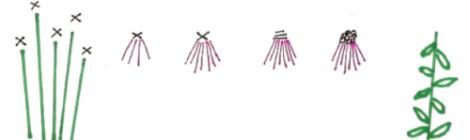 stitch diagram for purple coneflowers